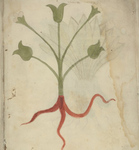 University of Pennsylvania Library's LJS 46 - Herbal (Video Orientation)