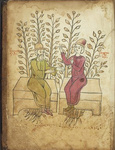 University of Pennsylvania Library's LJS 62 - Herbal (Video Orientation) by Dot Porter